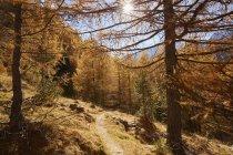 Живописный вид тропа, в осеннем лесу в Шнальшталь, Южный Тироль, Италия — стоковое фото
