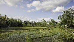 Зеленое поле под голубым облачным небом — стоковое фото