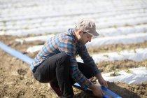 Granjero en el campo cuidando a las plantas de semillero - foto de stock