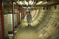 Полный вид сзади на рабочего, идущего по коридору в сетке для волос и одноразовой обуви — стоковое фото