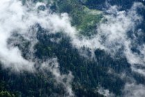 High angle view of misty forest, Bolshoy Thach Nature Park, Caucasian Mountains, Republic of Adygea, Russia — Stock Photo