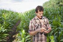 Фермер, стоящий в поле сельскохозяйственных культур с помощью смартфона — стоковое фото