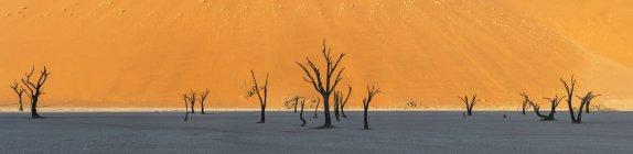 Vista panorámica de acacias muertas en el desierto - foto de stock