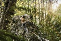 Мужской валун движется вверх по лесному камню, Horne Lake Caves Provincial Park, остров Ванкувер, Британская Колумбия, Канада — стоковое фото