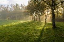 Sole che splende tra gli alberi — Foto stock