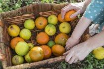 Девушки и малыш ребенок руки на корзина заготовленной апельсины — стоковое фото