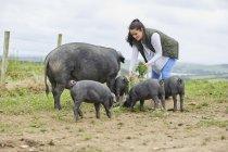 Frau auf Bauernhof füttert Schweine und Ferkel — Stockfoto