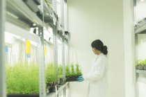 Female scientist removing  plant samples in  greenhouse lab — Stock Photo