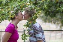 Romantic young couple kissing under plum tree on organic farm — Stock Photo