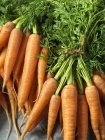 Zanahorias frescas con tapas de la zanahoria, atada con cuerdas, primer plano - foto de stock