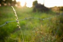 Колючая проволока забор на зеленом поле, крупным планом — стоковое фото