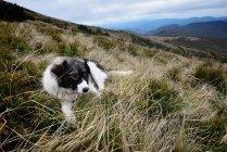 Cane appoggiato sulla collina sotto il cielo nuvoloso — Foto stock