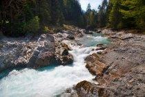 Rocky Creek nella foresta — Foto stock