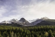 Green pine trees and snowcapped mountains under cloudy sky — Stock Photo