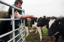 Farmer showing business woman cows — Foto stock