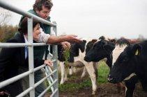 Fazendeiro que mostra vacas da mulher de negócio — Fotografia de Stock
