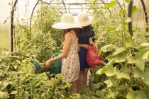 Two females wearing sun hats, using watering can to water plants in greenhouse — Stock Photo
