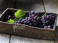 Uvas frescas cogidas con hojas en caja de madera - foto de stock