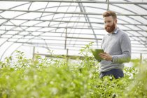 Man in polytunnel using digital tablet — Stock Photo