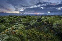 Musgo coberta paisagem com céu nublado do nascer do sol — Fotografia de Stock