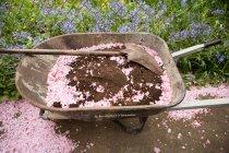 Carretilla con tierra y pétalos rosados - foto de stock