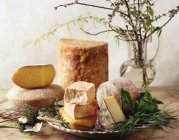 Selection of various cheese heads and slices — Stock Photo