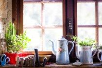 Panelas de café rústicas e plantas de panela no peitoril da janela da cozinha — Fotografia de Stock