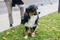Обрезанный образ человека, стоящего с собакой на улице — стоковое фото