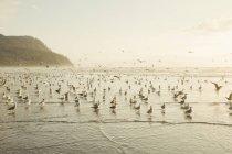 Herde von Möwen an Küste — Stockfoto