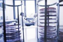 Vue d'entre les supports de boîtes de Pétri de scientifiques bavardant en laboratoire — Photo de stock
