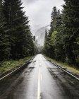 Autostrada bagnato che si estende attraverso boschi di pini — Foto stock