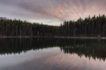 Pine trees and sunset sky reflecting in lake water — Stock Photo