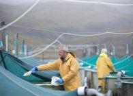 Человек кормит рыбу в шотландском инкубатории лосося — стоковое фото
