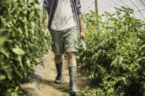 Cropped image of man carrying trowel and walking in vegetable garden — Stock Photo