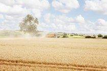Caminhos esculpidos no campo de cultivo — Fotografia de Stock