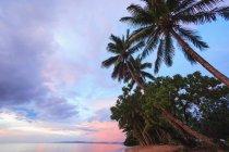 Пальмы на тропическом пляже — стоковое фото