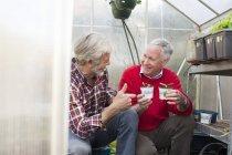 Amigos varones seniors en invernadero con plantas - foto de stock
