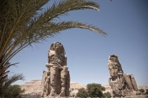 Memnon of Colossae with palm tree on foreground, Egypt — Stock Photo