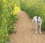 Собака стоїть на шляху — стокове фото