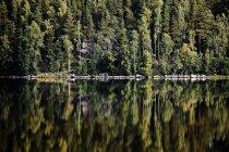 Зелений ліс, що відображають у ще озеро — стокове фото