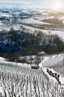 Arbres qui poussent sur la colline rural snowy — Photo de stock