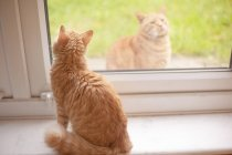 Кот том имбирь, глядя из подоконник пока еще имбирь Кот — стоковое фото