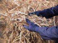 Operaio con il combustibile da biomassa erba elefante — Foto stock