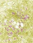 Scanning electron micrograph of russian spring-summer encephalitis — Stock Photo