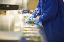 Обрезанное сбоку работника на производственной линии упаковки овощей в пластиковые контейнеры — стоковое фото