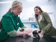 Vet examining cat in veterinary consulting room with cat 's owner — стоковое фото