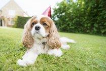 Собака в шляпе — стоковое фото
