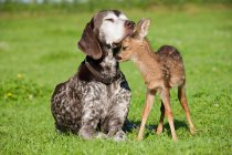Fawn and dog on grass — Stock Photo