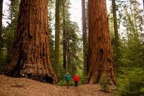 Coppia passeggiate nella foresta, Sequoia National Park, California, Stati Uniti d'America — Foto stock