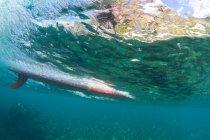 Surfbrett, Unterwasser-Blick, Hawaii — Stockfoto